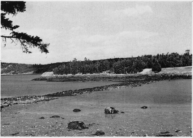 Paradise Cove Roque Island At Low Tide Showing Mill Dam 1954